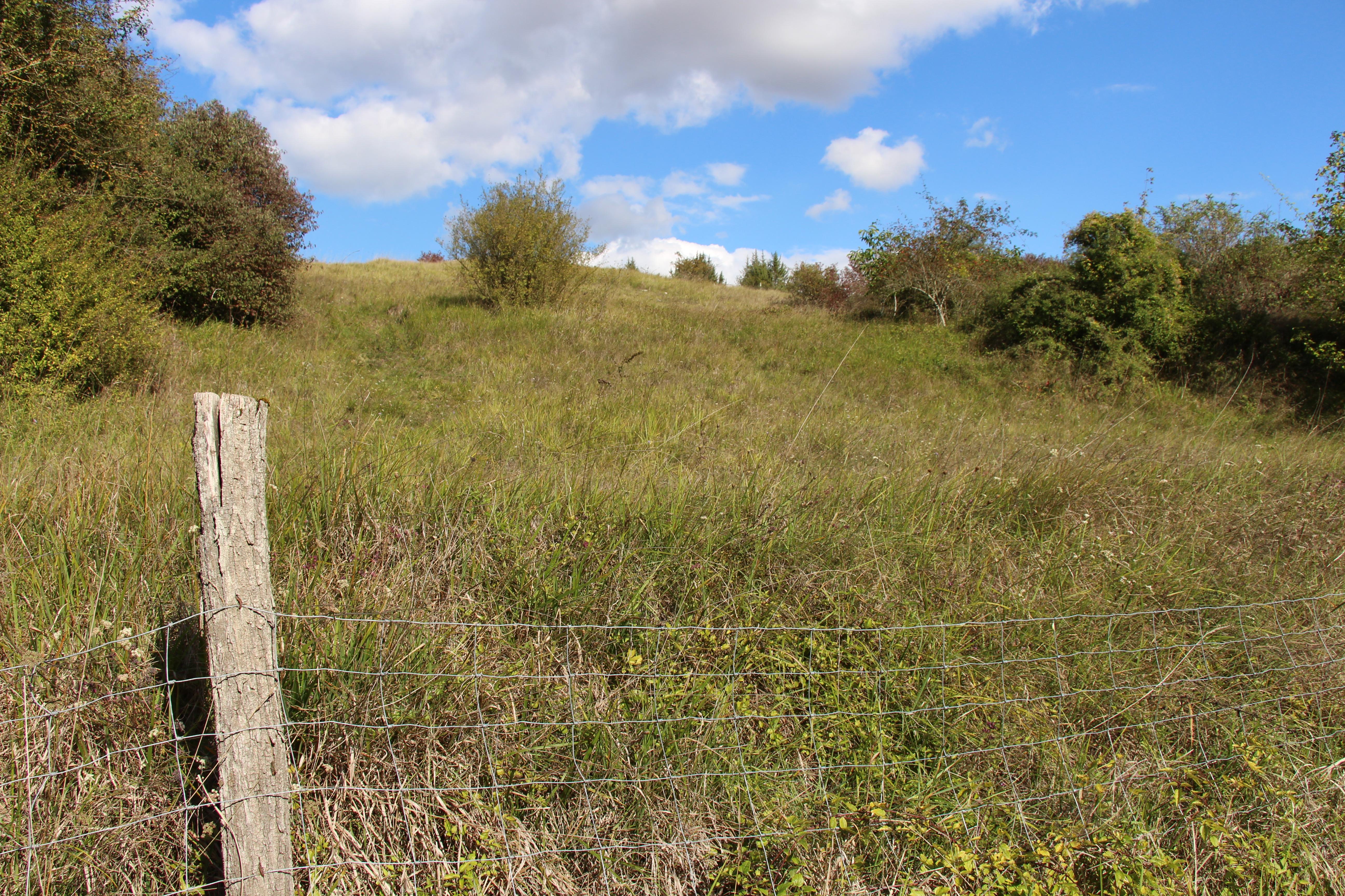 CREN : Les pelouses sèches de Buxerolles et Montamisé reprennent du service