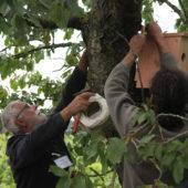 Des vignes plus respectueuses de l'environnement