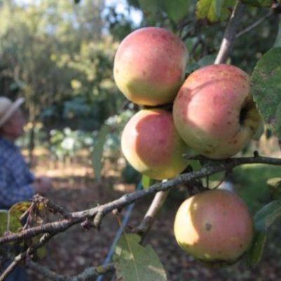 L'association Prom'Haies plante un verger de sauvegarde de fruits anciens