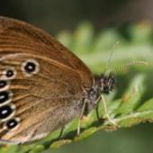LISEA et CDC Biodiversité s'associent sur le long terme et déploient un programme de mesures de compensation environnementale en Gironde