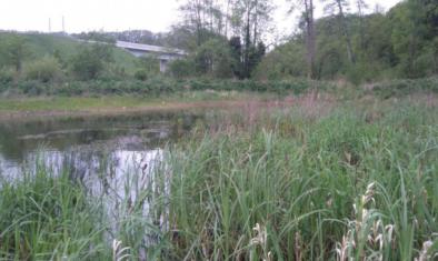 Atteinte des objectifs de compensation environnementale de la LGV SEA